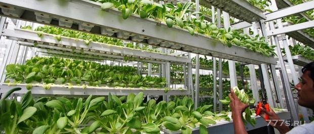Создание нового стартапа для выращивания овощей