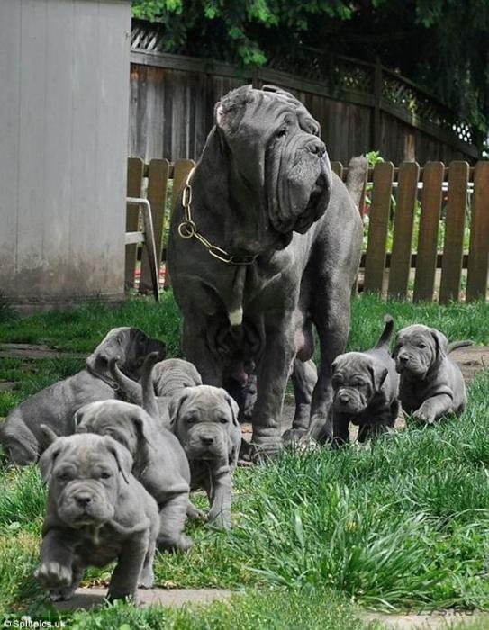 Фотографии гордых собак со своими щенками растопят ваше сердце