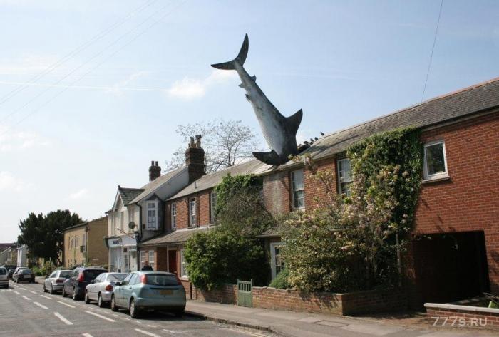 7,5-метровая большая белая акула, торчащая из крыши, стала охраняемым туристическим местом