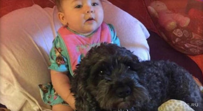 Собака спасла ребенка во время пожара