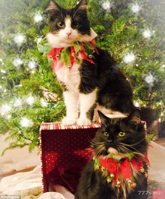 Домашние животные Инстаграма празднуют Рождество и Новый год, одевшись в праздничные костюмы - результаты восхитительны