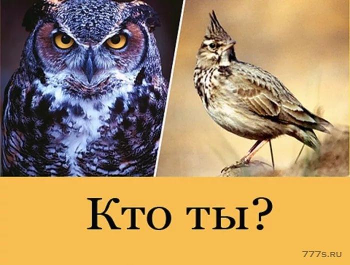 Какие люди более общительны, совы или жаворонки