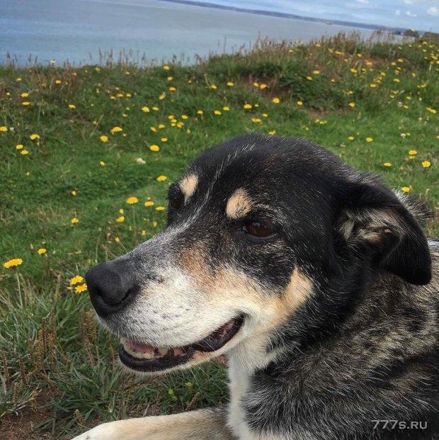 Собака Колли оказалась в безопасности после того, как она потерялась в снегу в течение десяти дней