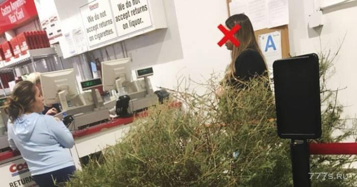 Женщина вернула елку в магазин в январе, потому что она была «мертвой»