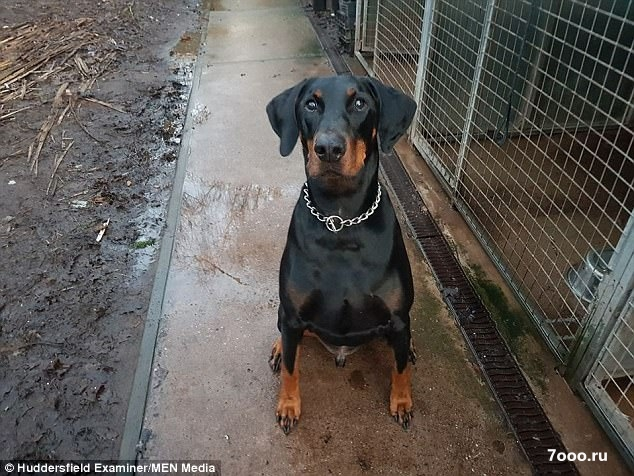 Собака проехала 113 миль на поезде сама, чтобы найти своего владельца