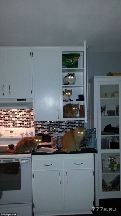 Владельцы делятся снимками своих любимых домашних животных, которые ведут себя очень плохо