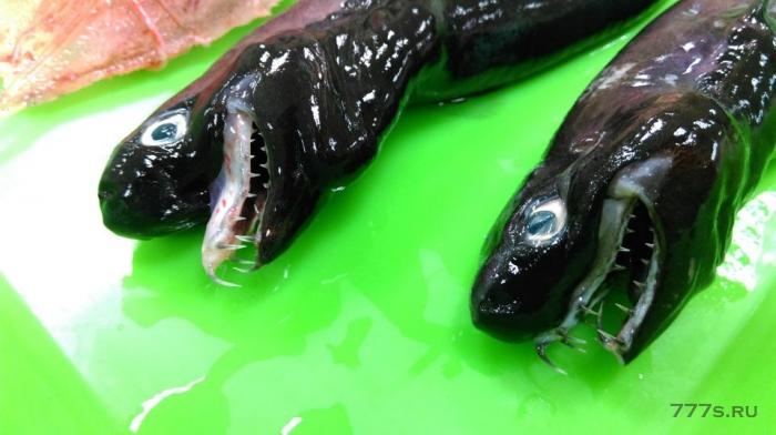 Ужасная акула с выдвигающимися челюстями, такими как у монстра в фильме «Чужой» была вытащена из глубины