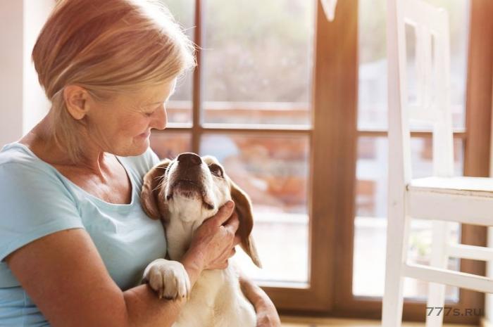 «Толкователь собак», позволяющий людям разговаривать со своими любимцами, появится менее чем через десять лет