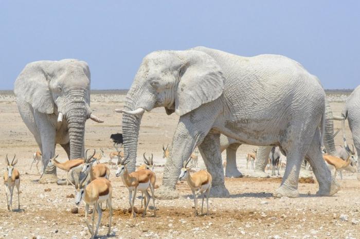Удивительные белые слоны, покрытые глиной, обманывали туристов