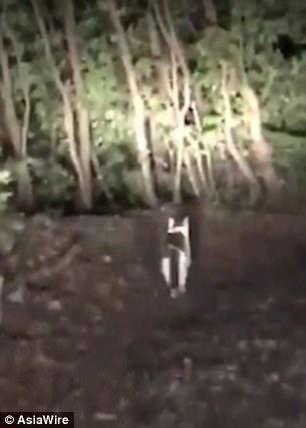 Невероятный момент, когда кошка, похоже, выводит потерявшегося автомобилиста с отдаленной горы - даже ждет его по пути