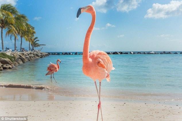 Роскошный курорт Багамских островов ищет главного офицера по Фламинго, чтобы следил за стаей длинноногих птиц