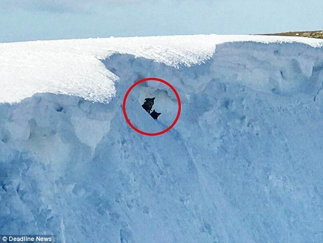 Герой-альпинист рискует своей жизнью, чтобы спасти двух собак