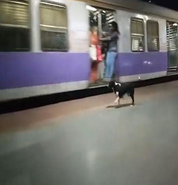 Тайна «убитой горем» собаки с четырьмя щенками, которая встречает у платформы поезд каждую ночь