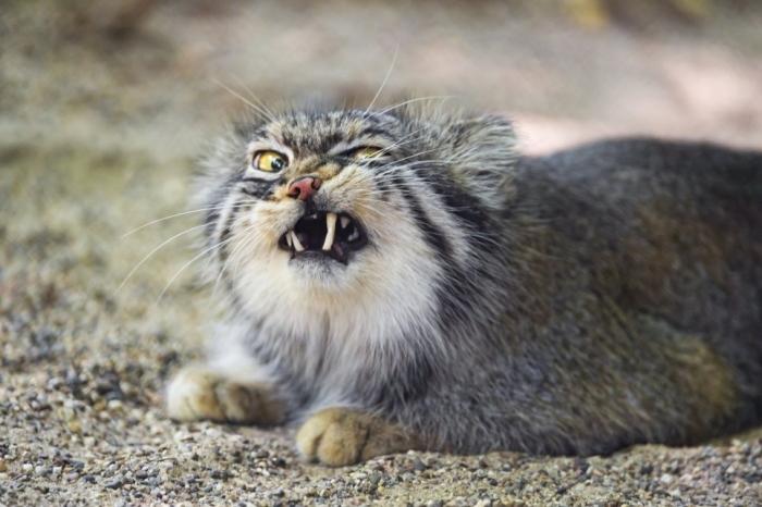 Посмотрите на самую выразительную кошку в мире
