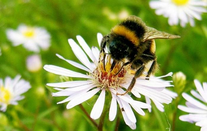 Подчинение насекомых растениям
