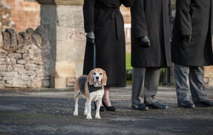 Бигль Базил работает как собака похоронной терапии, чтобы помочь людям в самые трудные дни
