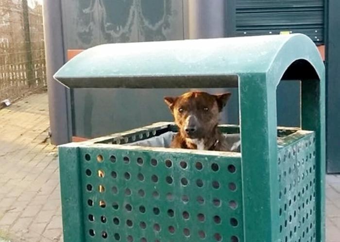 Дрожащая собака, найдена внутри урны в парке при температуре ниже нуля