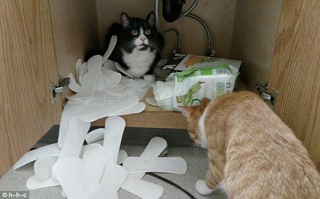 Владельцы кошек обмениваются снимками своих озорных кошек, вызывающих проблемы в веселой фотоподборке
