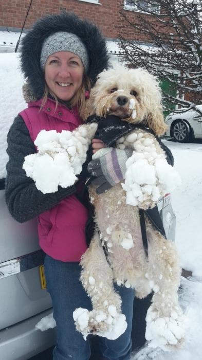 Эти очаровательные собаки никак не могут наиграться в снегу