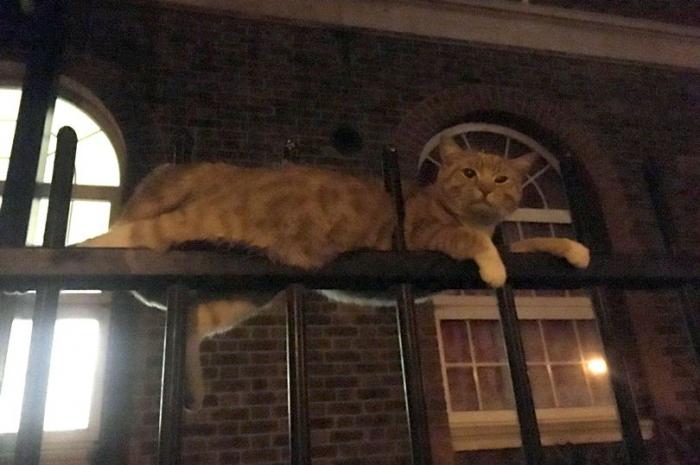 Кошке повезло чудесно выжить, когда она напоролась сразу на три металлических штыря от забора
