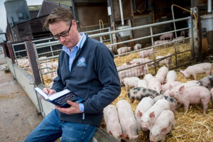 Фермер хочет выражение «жрать, как свинья» убрать из словаря, так как оно оскорбительно для животных
