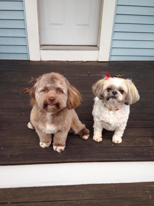 Эта «собака с человеческим лицом» поразила интернет ... так на какую из знаменитостей вы думаете, что он больше всего похож?