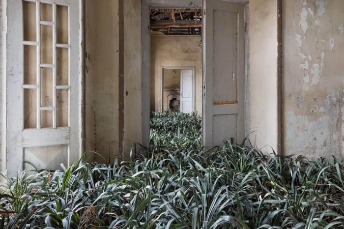 Фотосъемка нереальных растений, проросших в заброшенных домах