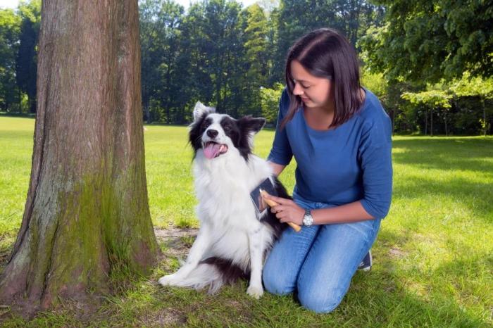 Дружелюбные собаки привязываются к людям и становятся друзьями в течение десяти минут, утверждают эксперты