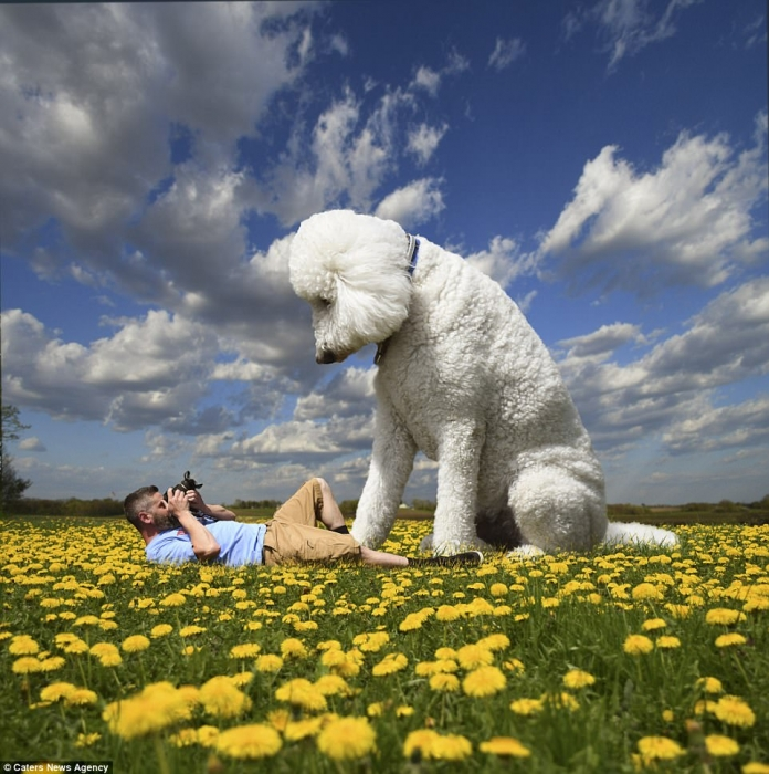 Владелец собаки стал хитом Инстаграма, превратив свою собаку в 2-метрового гиганта в серии фотографий, сделанных в Photoshop