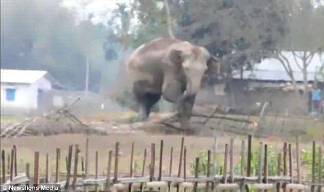Драматический момент, когда слониха спасает своего слоненка, который мог утонуть, попав в яму с жидкой грязью