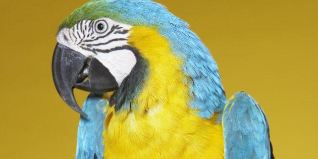 Полиция вторглась в спор между владельцем и попугаем