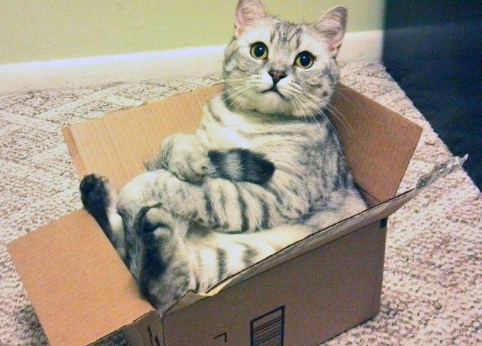 Надежное укрытие кошек