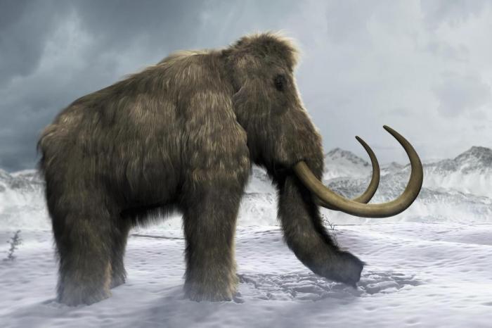 Ученые утверждают, что скоро они смогут клонировать древних мамонтов