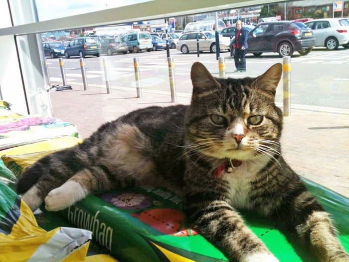 Мужчина заметил, что в супермаркете Теско кошка «выставлена на продажу»