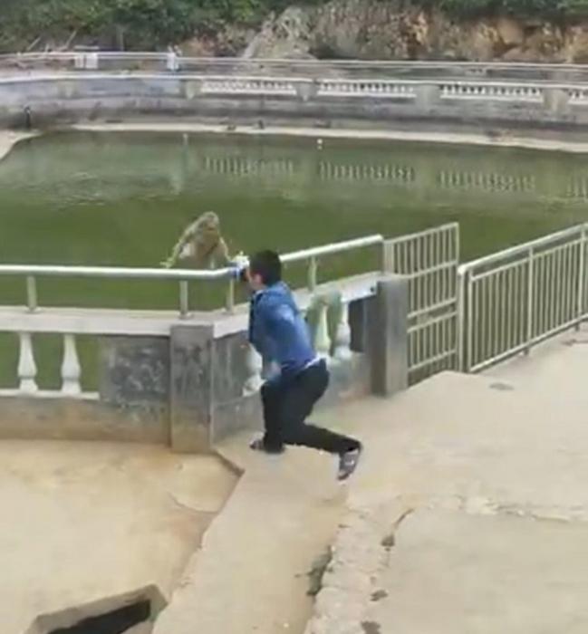 Шутник подталкивает обезьяну в пруд, но животное возвращается и сразу атакует его