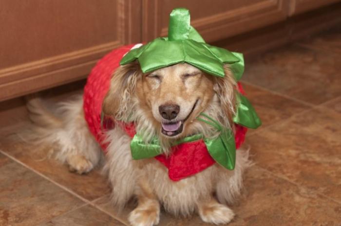 Едят ли собаки помидоры и огурцы?