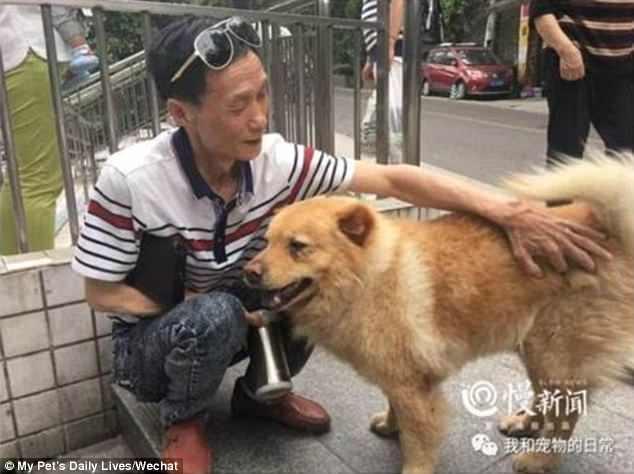Собака ежедневно ждет по 12 часов на вокзале, когда её владелец вернется домой