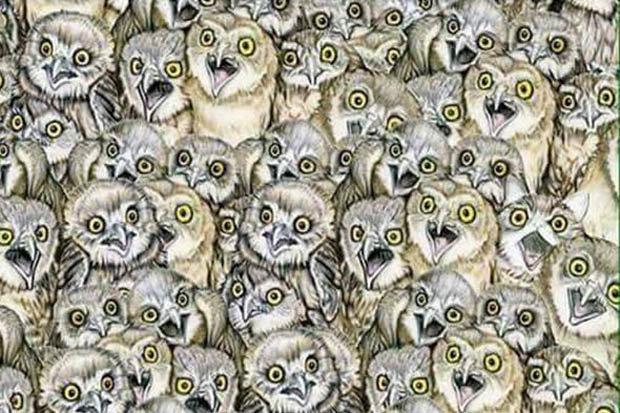 Сколько на картинке сова