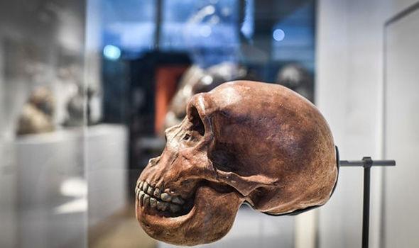 Ученые используют ДНК неандертальца чтобы вырастить «МИНИ-МОЗГИ»