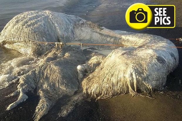 Местные жители сбиты с толку, когда таинственный морской монстр был выброшен на берег