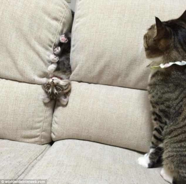 Смешные снимки показывают, как кошки попадают в некоторые очень глупые ситуации