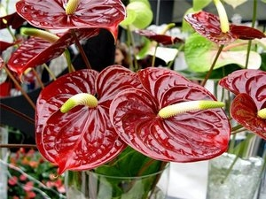 Необычное домашнее растение