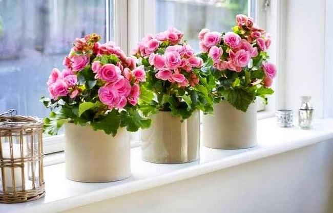 Как улучшить цветение растений