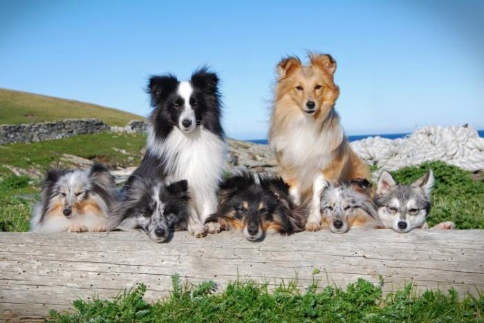 На потрясающих фотографиях показаны семь восхитительно послушных собак, принимающих свои позы для камеры