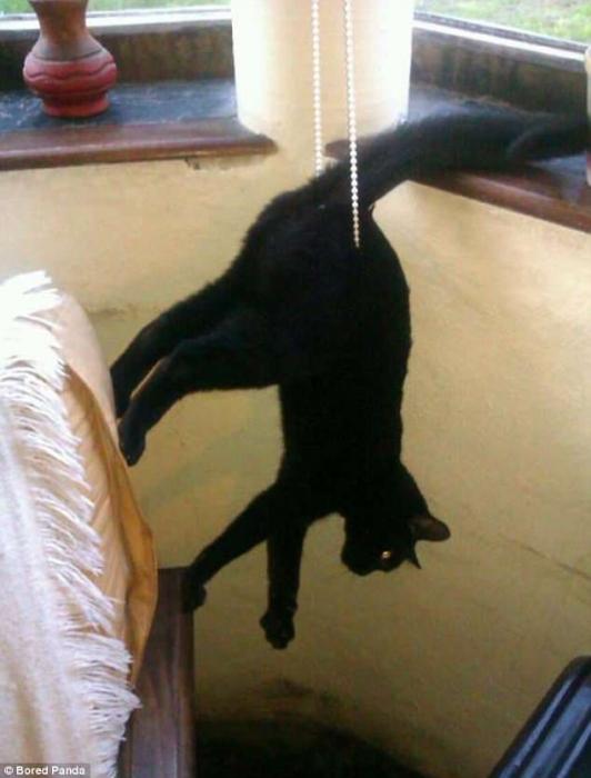 Владельцы делятся веселыми снимками своих кошек, попавших в очень неудобные положения