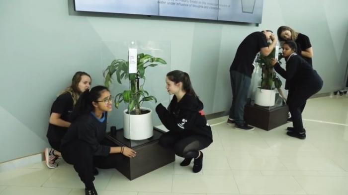 Икеа просит студентов запугивать растение в течение 30 дней, чтобы доказать, как негативность может остановить рост