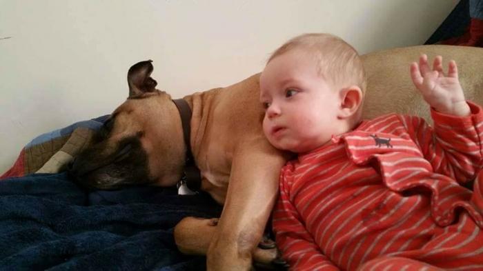 У этих маленьких беззащитных детей есть большие собаки