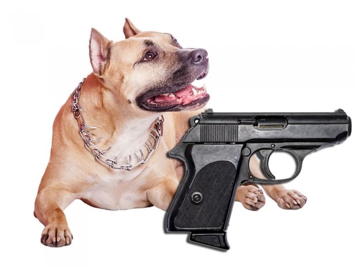 Мужчина из Айовы утверждает, что собака из хулиганских побуждений выстрелила ему в ногу