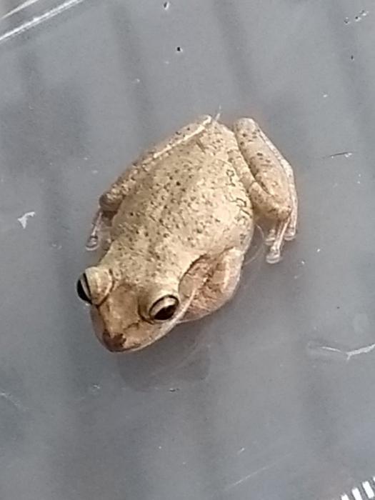 Семья случайно привезла экзотическую лягушку домой в Великобританию из Флориды