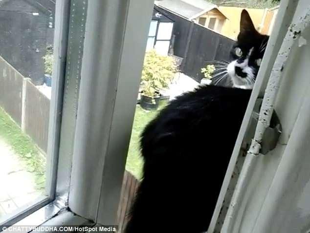 Бесстрашная кошка прыгает из окна первого этажа и приземляется на батуте